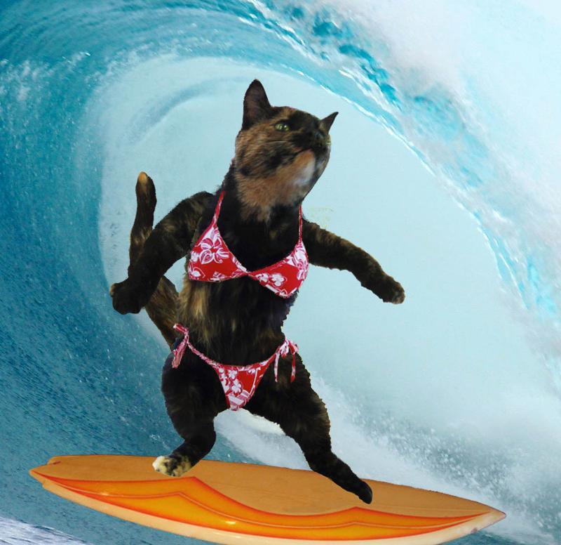 Surfin' Izzy