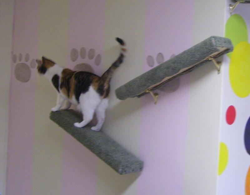 boarding kitty
