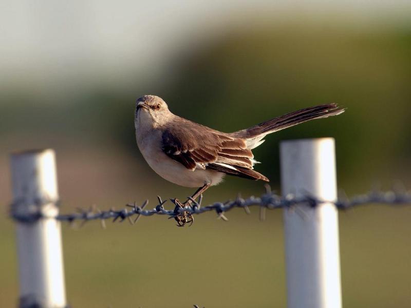mockingbird h eskin