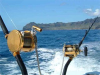 Saltwater Reels