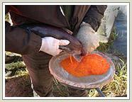 Featured Fishing Article - Spawning Kokanee