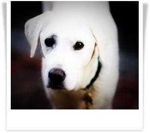 white-dog-polaroid.jpg