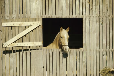 horse-stable.jpg