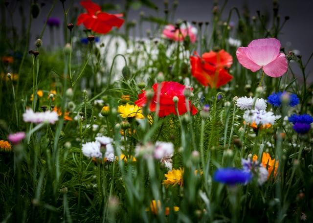 Zack's Place Wild Flower Garden