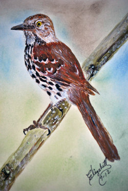 Brown Thrasher, State bird of Georgia