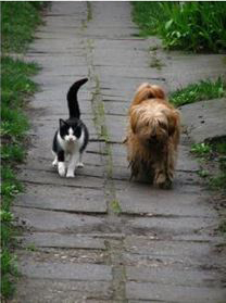 Cat & dog on a walk