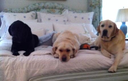 Bailey, Piper, BIlly