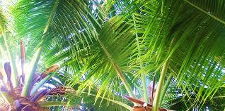 palm header 2