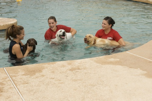 girls in the pool with dogs1