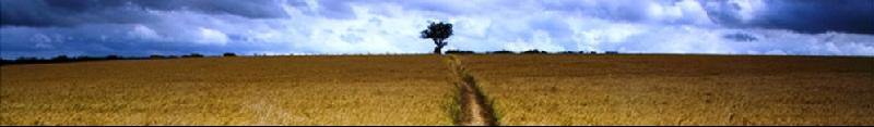 Path in Field