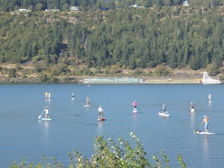 everybody SUP's on a beautiful Hood River day