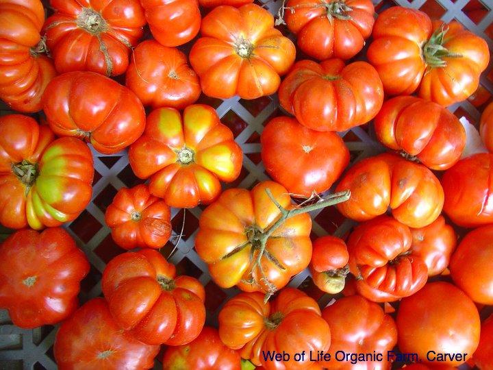 tomatoes_weboflife