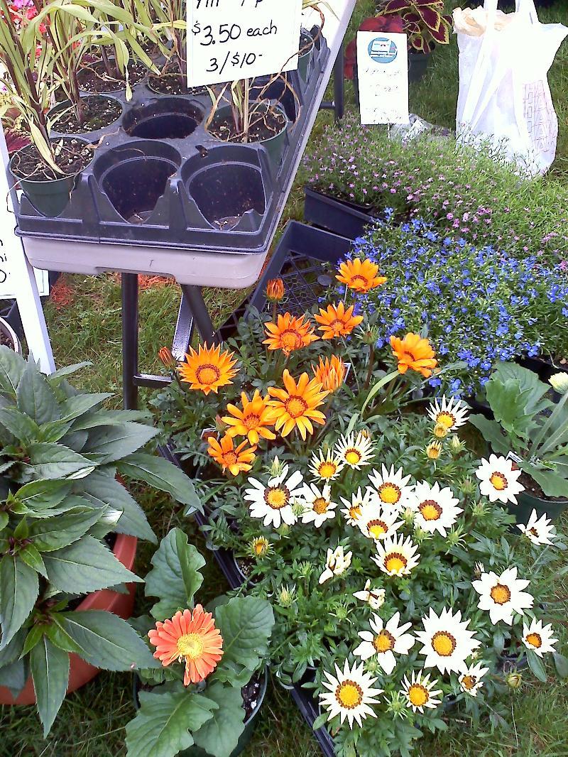 flowers_souza