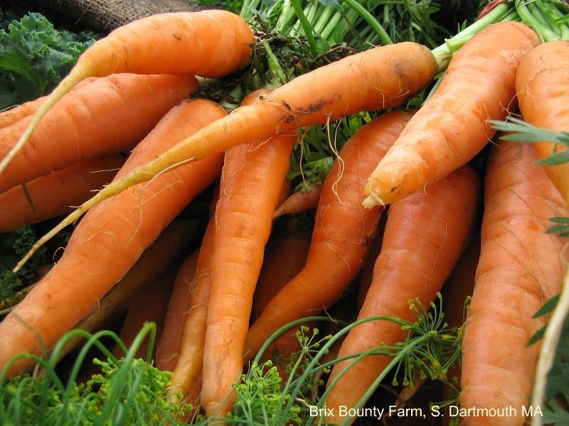Brix_carrots