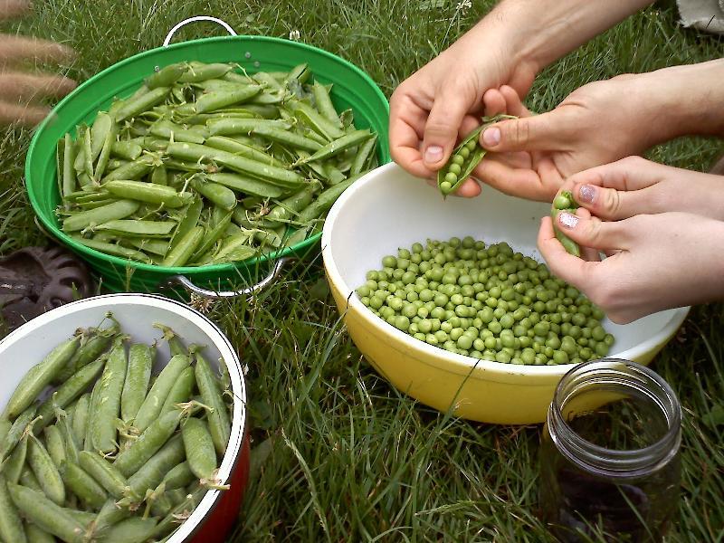 peas_hands