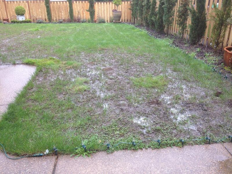 Cranefly damage #1 2012