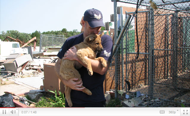 Dog rescued from destroyed shelter.