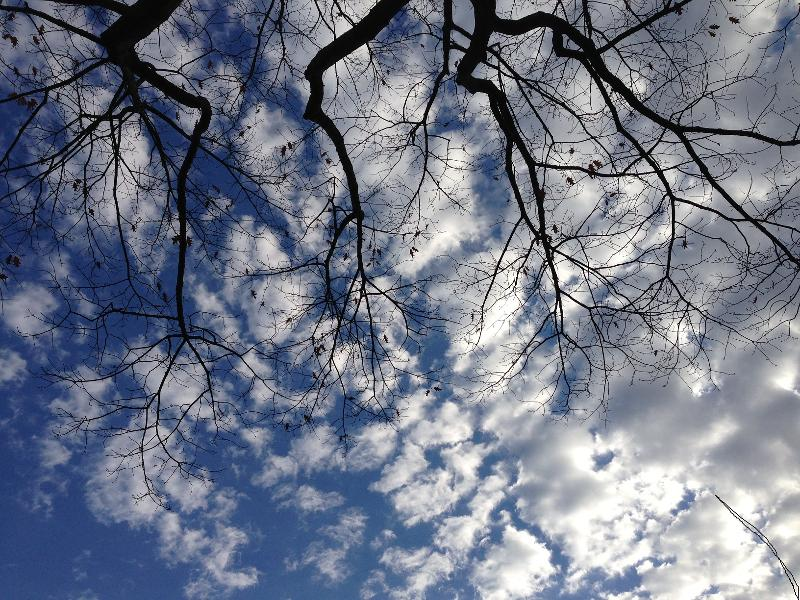 sky thru branches