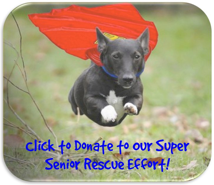super senior button