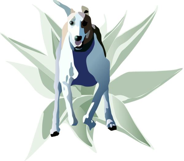 tequila hound