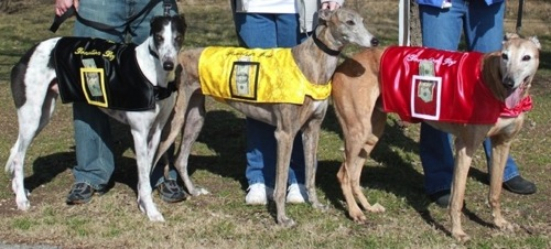 image of 3 dogs wearing new donation vests