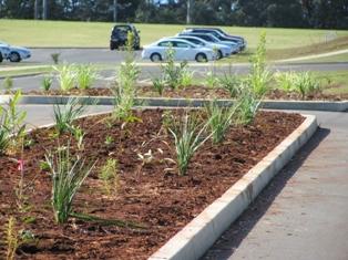 SPORTS GROUND PLANTING