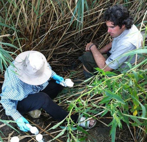 Taking samples in the Mississippi River Delta