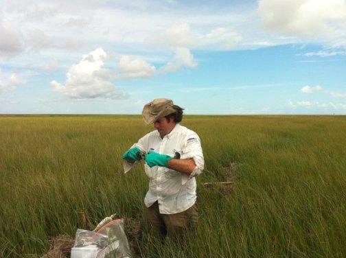 Taking samples in the marsh