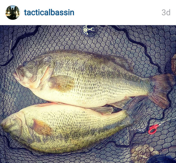 Dd bass of the week moving baits win big o brauer winter for Mlf fishing scale
