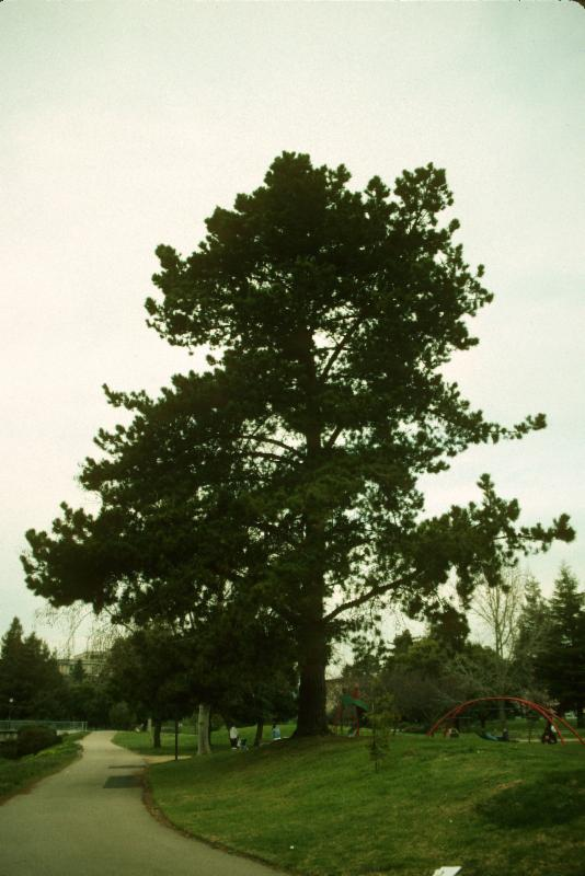 Tree #13