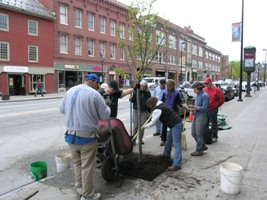 Tree Planting in Montpelier