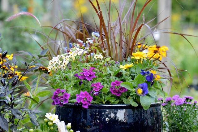 ContainerPlanting-summer