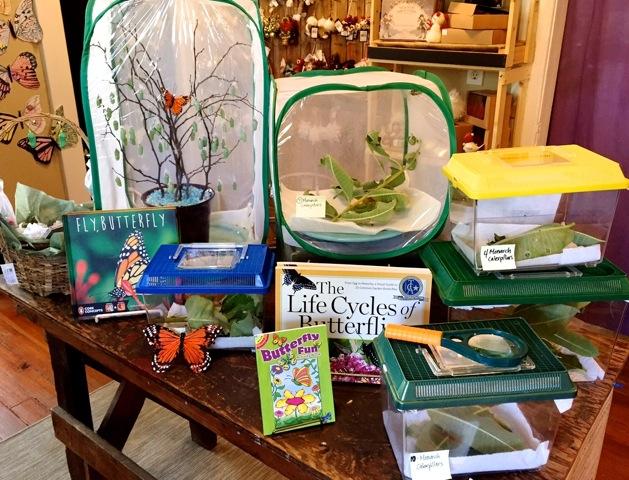 Butterfly raising supplies