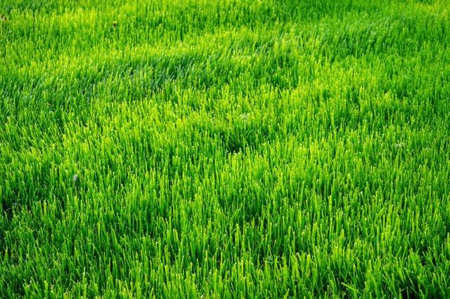 St. John's Organic Lawn