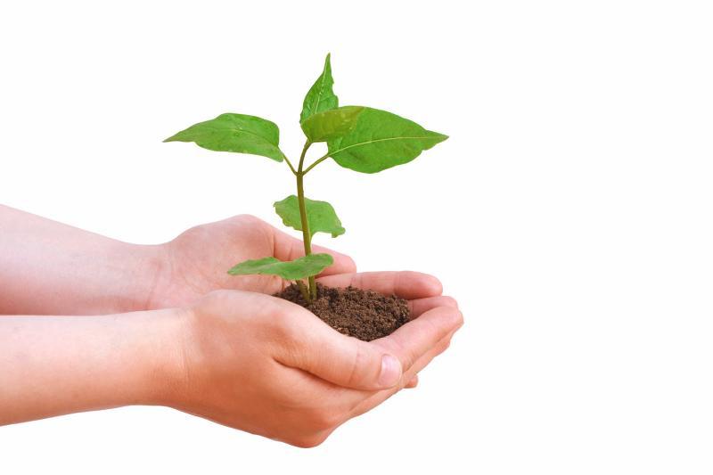 Cultivate Success