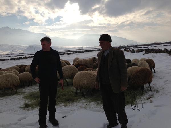 Shepherds on Ararat