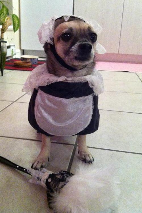 Ralphie Halloween