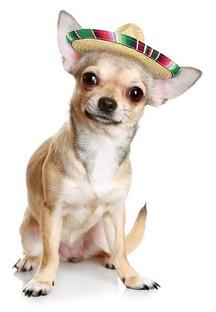 El Cid Rewards Dog