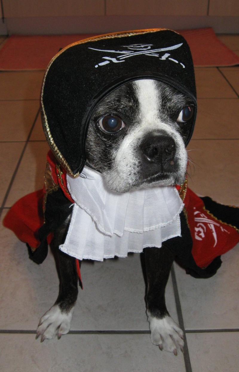 Dixie Pirate Costume