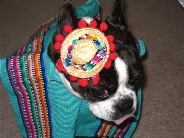 Mexican Dixie pic