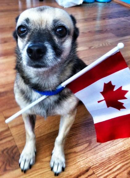 Ralphie Canada pic