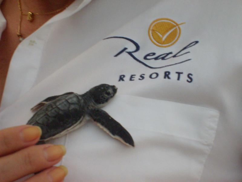 Turtle Real Resorts