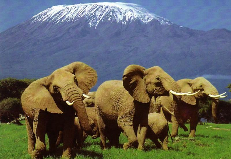 Acacia Holidays Elephants