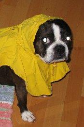 Dixie raincoat pic