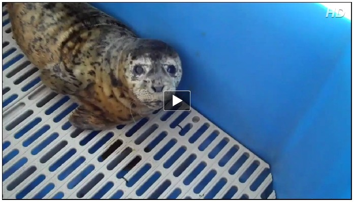 Marine Mammal Rescue Video