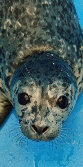 Marine Mammal Rescue Pic