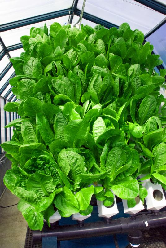 how to grow plants using aquaponics