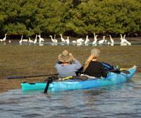 Kayak Birding
