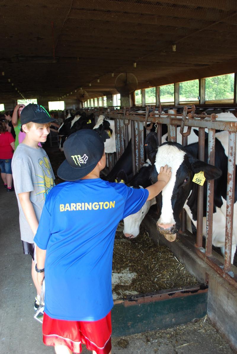 UNH School to Farm cow & boys
