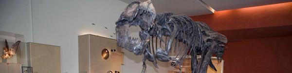 T.rex Banner